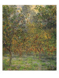 Lemon Trees, 1884 Giclee Print by Claude Monet