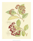 Berries and Blossoms II Giclee Print by Samuel Curtis
