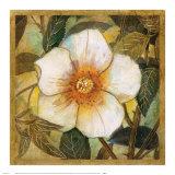 White Magnolia I Kunstdrucke von  Danson