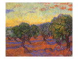 Grove of Olive Trees, 1889 Gicledruk van Vincent van Gogh