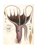 Umbrella Squid, 1835 Giclee Print by Antoine Chazal