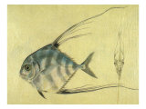 Thread-Finned Trevally Giclee Print