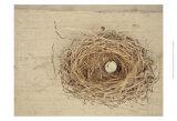 Nesting III Posters par Meghan McSweeney