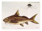 Tanganyika Catfish, 1898 Giclee Print