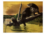 Otters Fear Forest Fire, 1952 Giclee Print by Stan Galli