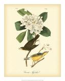 Canada Flycatcher Reproduction procédé giclée par John James Audubon