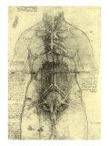 Anatomical Structure Giclee Print by  Leonardo da Vinci