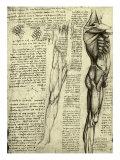 Da Vinci's Man Machine Giclee Print by  Leonardo da Vinci
