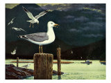 Seagulls and Harbor, 1959 Giclee Print