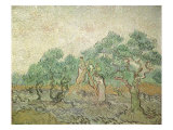 The Olive Orchard, 1889 Giclee Print by Vincent van Gogh