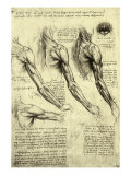 Leonardo da Vinci - Studies of Human Arm - Giclee Baskı