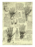 Functions of Human Hand Giclee Print by  Leonardo da Vinci