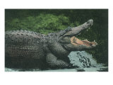 Alligator with Open Jaws Giclee Print