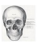 Human Skull, 1858 Giclee Print