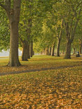 Autumn, Hyde Park, London, England, United Kingdom, Europe Photographic Print by James Emmerson