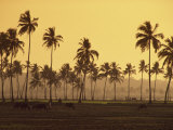 Rice Fields in Countryside around Panaji, Goa, India Photographic Print by Alain Evrard