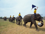 Line of Elephants in a Soccer Team During November Elephant Round-Up Festival, Surin City, Thailand Photographic Print by Alain Evrard