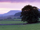 Spectacular Sunset Near Hardraw in Wensleydale, Yorkshire Dales National Park, Yorkshire, England Photographic Print by Patrick Dieudonne