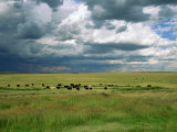 Cattle Ranching, N3 Highway, South Africa, Africa Photographic Print by Alain Evrard