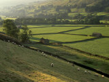 Walled Fields and Barns, Swaledale, Yorkshire Dales National Park, Yorkshire, England, UK Reproduction photographique par Patrick Dieudonne