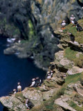 Puffins on Cliffs, Hermaness Nature Reserve, Unst, Shetland Islands, Scotland, UK Photographic Print by Patrick Dieudonne