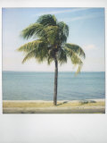 Polaroid of Single Palm Tree with Caribbean Sea in Background, Cienfuegos, Cuba, West Indies Photographic Print by Lee Frost