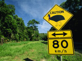 Warning Road Sign for Cassowaries Near Mission Beach, Northeast Coast of Queensland, Australia Photographie par Robert Francis
