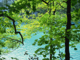 Plitvice Lakes National Park, UNESCO World Heritage Site, Croatia, Europe Photographic Print by Ken Gillham