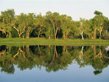 Reflections of Eucalyptus Trees on Annaburroo Billabong, Northern Territory, Australia Photographic Print by Robert Francis