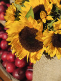 Sunflowers and Apples, the Hamptons, Long Island, New York State, USA Photographic Print by Robert Harding