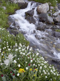 Stream Through Wildflowers, American Basin, Uncompahgre National Forest, Colorado, USA Photographic Print by James Hager