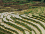 Farmer in Terraced Rice Paddies at Longsheng in North East Guangxi, China Photographic Print by Robert Francis
