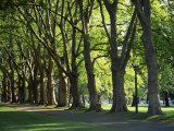 Trees Lining Park Walk Way, Melbourne, Victoria, Australia, Pacific Photographic Print by Dominic Harcourt-webster