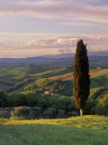 Cypress Tree and Countryside Near Val D'Asso, Tuscany, Italy, Europe Photographic Print by Patrick Dieudonne