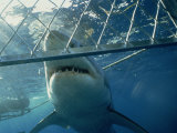Great White Shark from Shark Cage, Australia, Pacific Photographic Print by James Gritz