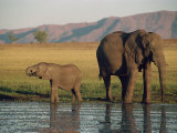Elephant and Calf, Fothergill Island, Lake Kariba, Zimbabwe, Africa Photographic Print by Jennifer Fry