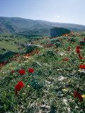 Landscape Near Shiraz, Iran, Middle East Photographic Print by Robert Harding