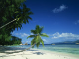 Leaning Palm Tree and Beach, Anse Severe, La Digue, Seychelles, Indian Ocean, Africa Photographic Print by Lee Frost