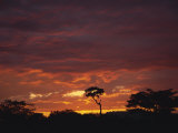 Silhouette of African Trees at Sunrise, Uganda, East Africa, Africa Photographic Print by Dominic Harcourt-webster