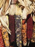 Indian Ornamental Corn,The Hamptons, Long Island, New York State, USA Fotografie-Druck von Robert Harding