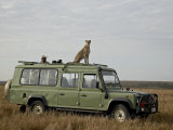 Cheetah on Safari Vehicle, Masai Mara National Reserve, Kenya, East Africa Photographic Print by James Hager