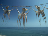 Octopi Hung Out to Dry, Nerja, Costa Del Sol, Andalucia, Spain, Europe Photographic Print by Robert Francis