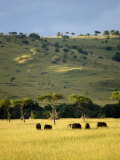 Masai Mara National Reserve, Kenya, East Africa, Africa Photographic Print by Harding Robert