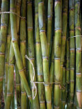 Close-Up of Bundles of Sugar Cane in Mexico, North America Photographic Print by Michelle Garrett