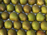 Overhead View of Rows of Pears in Packaging Photographic Print by Michelle Garrett