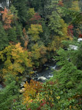 Linville Gorge and Autumnal Forest Canopy, Blue Ridge Parkway, North Carolina, USA Photographic Print by James Green