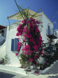 Bougainvillea on a White House on the Island of Spetse, Greek Islands, Greece, Europe Photographic Print by Lee Frost