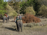 Elephant Ride and Indian Tiger, Bandhavgarh Tiger Reserve, Madhya Pradesh State, India Photographic Print by Milse Thorsten