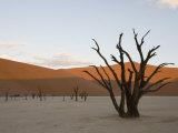 Dead Vlei, Sossusvlei, Namib Desert, Namibia, Africa Photographic Print by Milse Thorsten