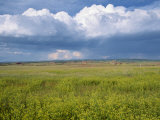 Landscape of Wild Flowers and Fields, Wyoming, United States of America, North America Photographic Print by Mcleod Rob